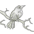 Bird on Branch Stationery