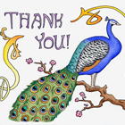 Peacock Thank You Card